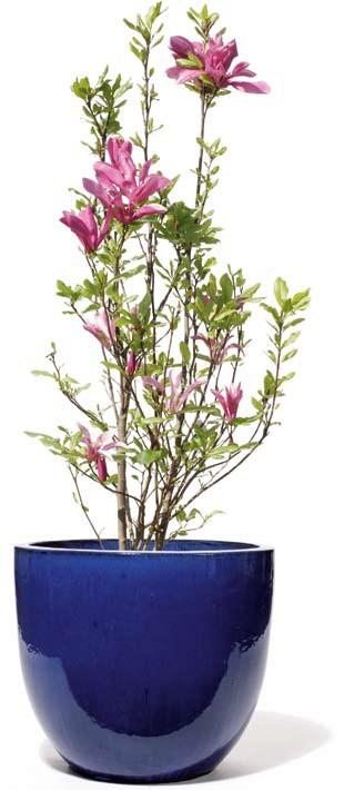 Vaso-Pinolo-konigsblau-kermik-kubel-Stimmungsbild