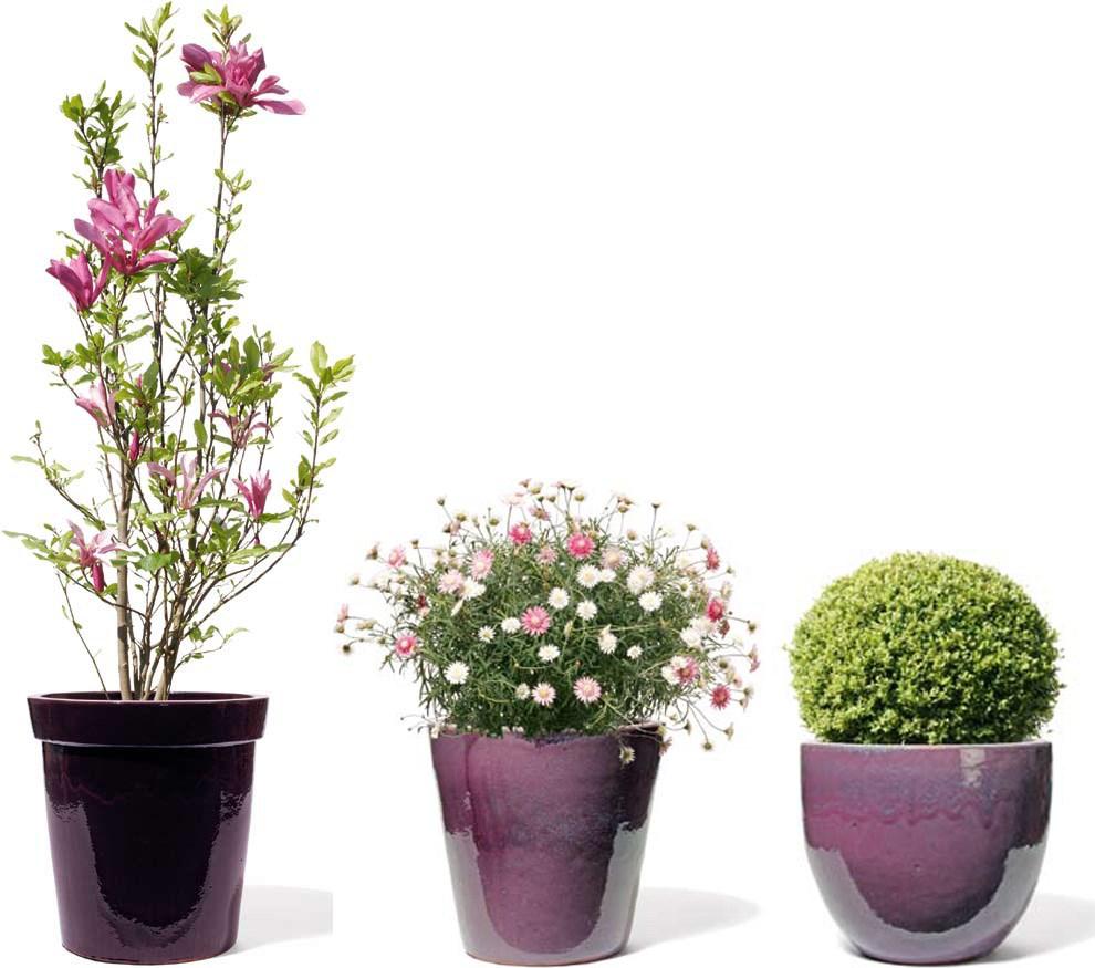 terra-dura-lavendel-kermik-kubel-stimmungsbild
