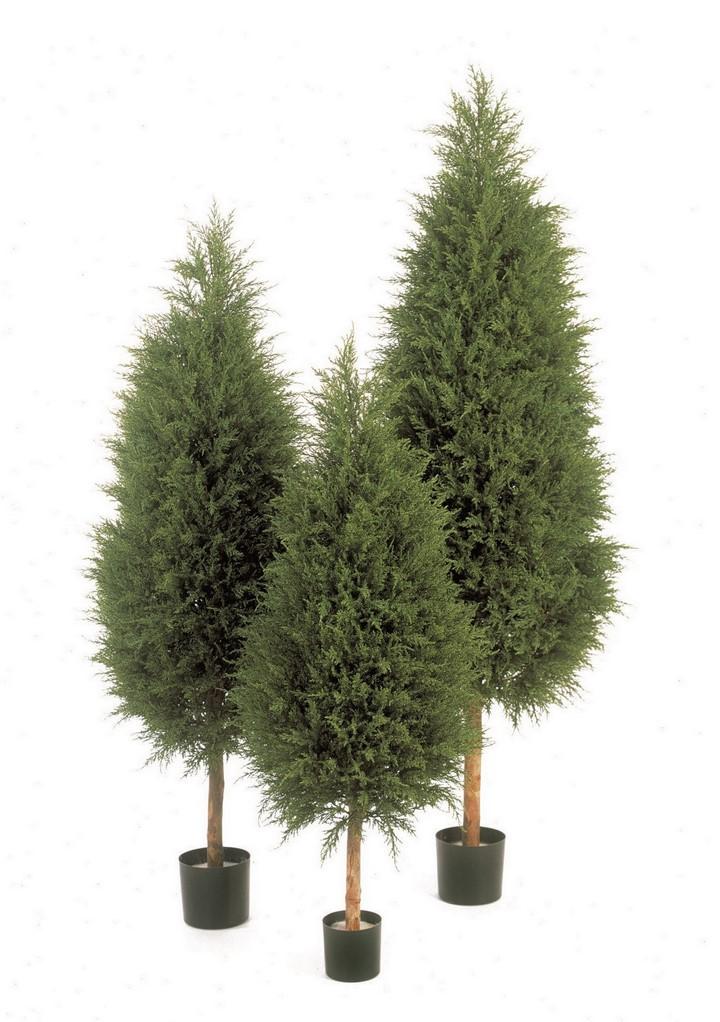 cypres-tree-kunstpflanze-stimmungsbild