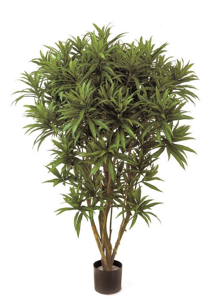 dracaena-reflexa-jamaica-kunstpflanze-stimmungsbild