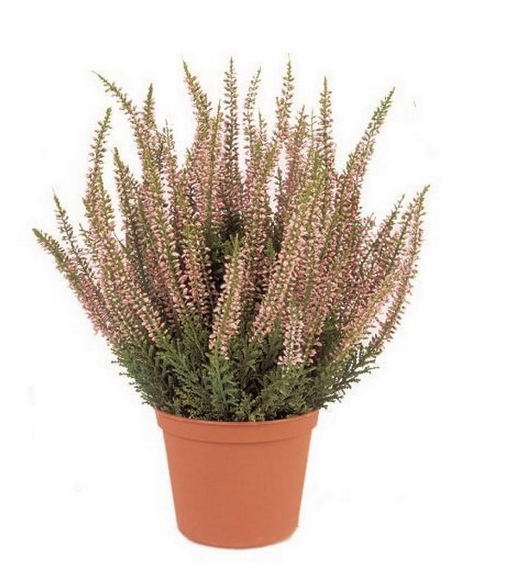 erica-kunstpflanze-stimmungsbild