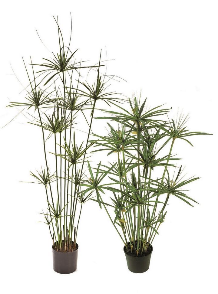 paypyrus-tree-kunstpflanze-stimmungsbild