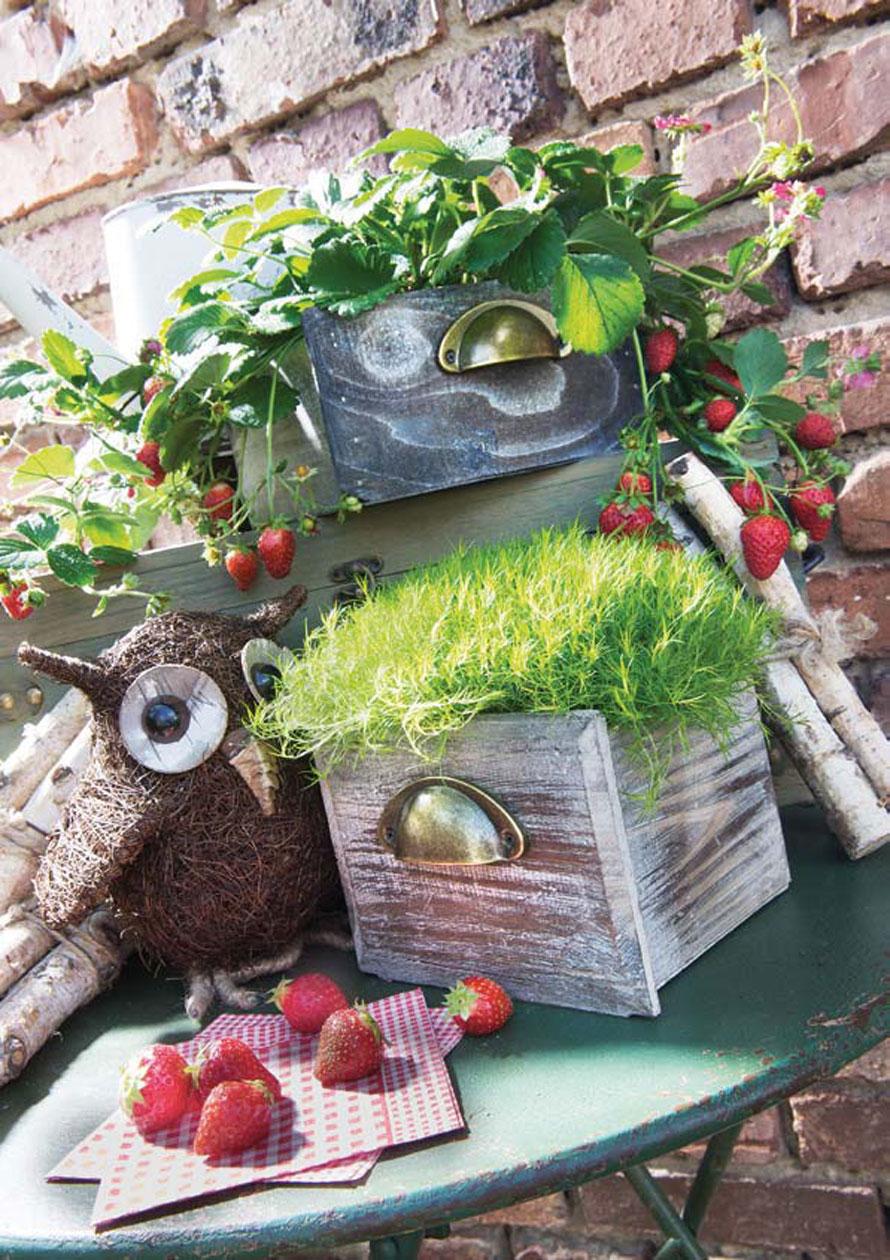 http://www.terrapalme.de/media/image/locker/Schublade-bepflanzbar-Stimmungsbild.jpg