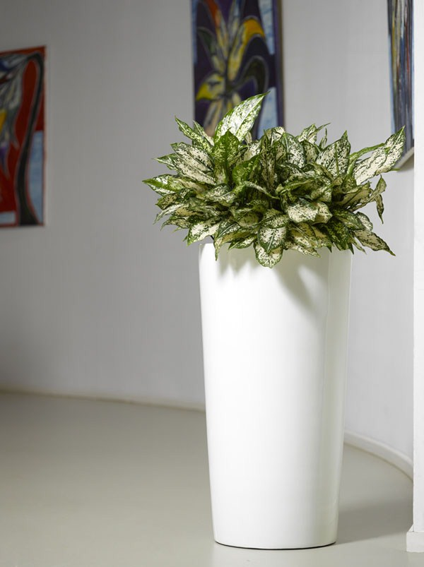 Krappa Bamboo Pflanzgefäß | Hochglanz Weiß | Terrapalme Heim- und ...