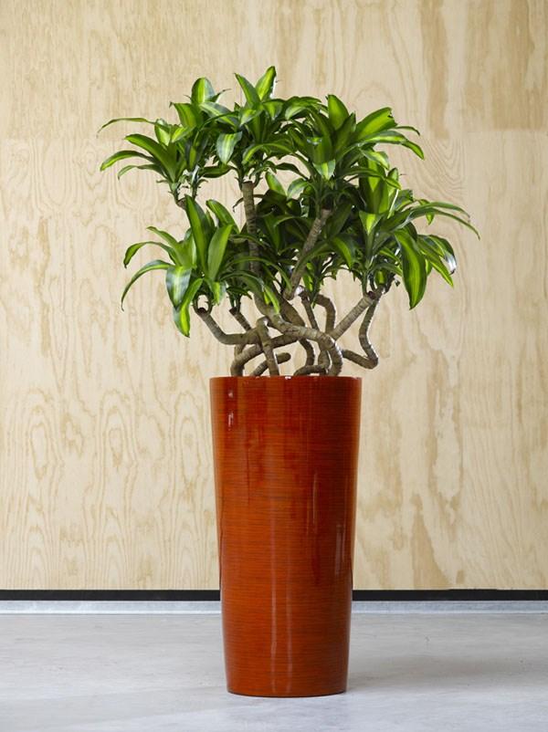 Krappa Bamboo Red