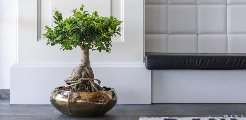 moda antique gold keramikschale terrapalme heim und. Black Bedroom Furniture Sets. Home Design Ideas