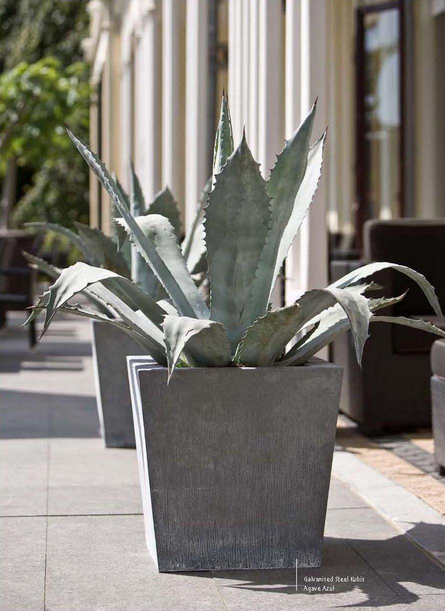 agave-azul-nk-acier-feuerverzinkter-pflanzkuebel-stimmungsbild