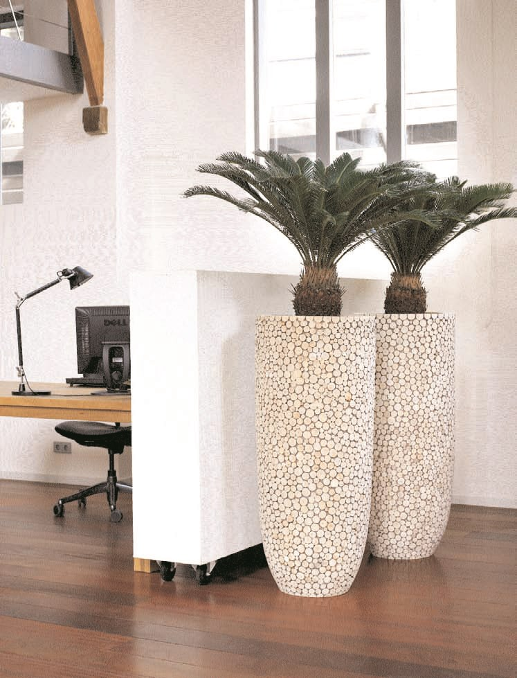 naturalwood-natural-trendy-wood-stimmungsbild-cycas-revoluta