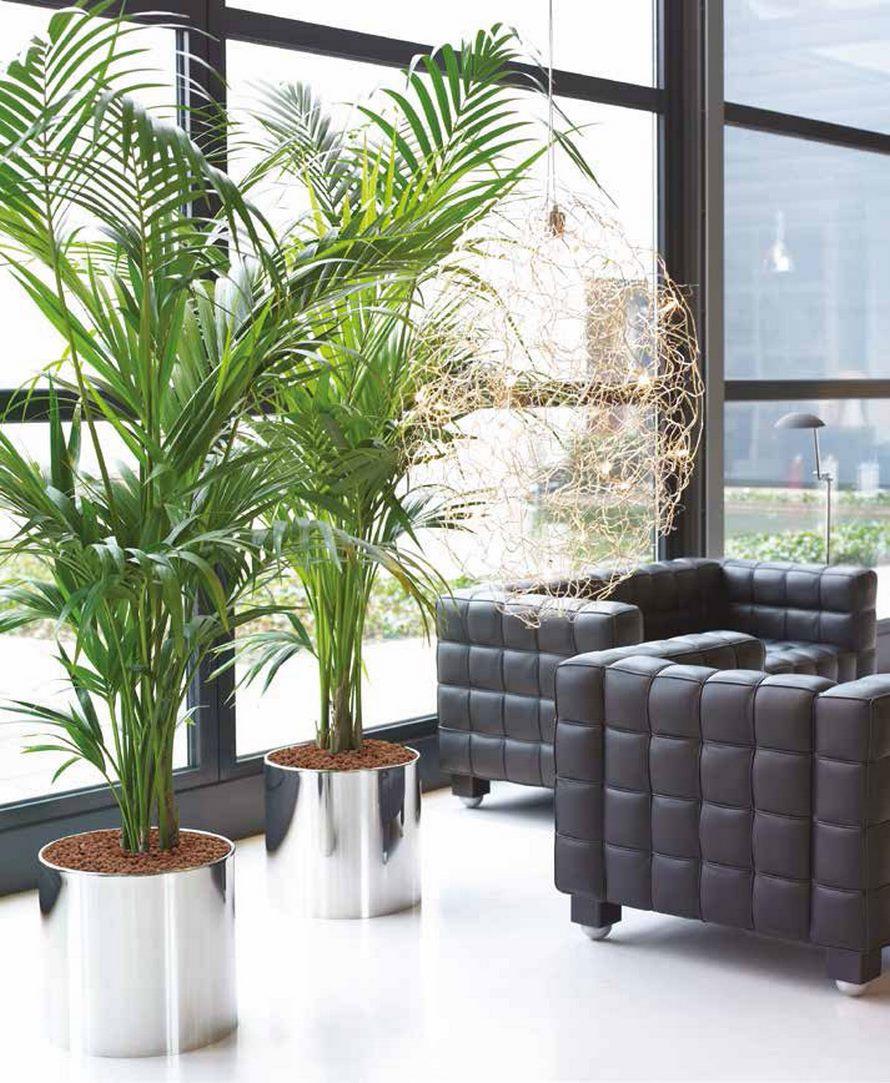kentia-palme-nk-aluminium-poliert-pflanzkuebel-stimmungsbild
