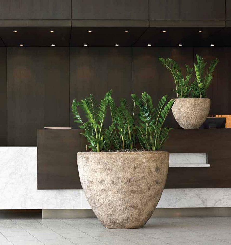 zamioculcas-zamiifolia-nk-polystone-rock-oval-stimmungsbild