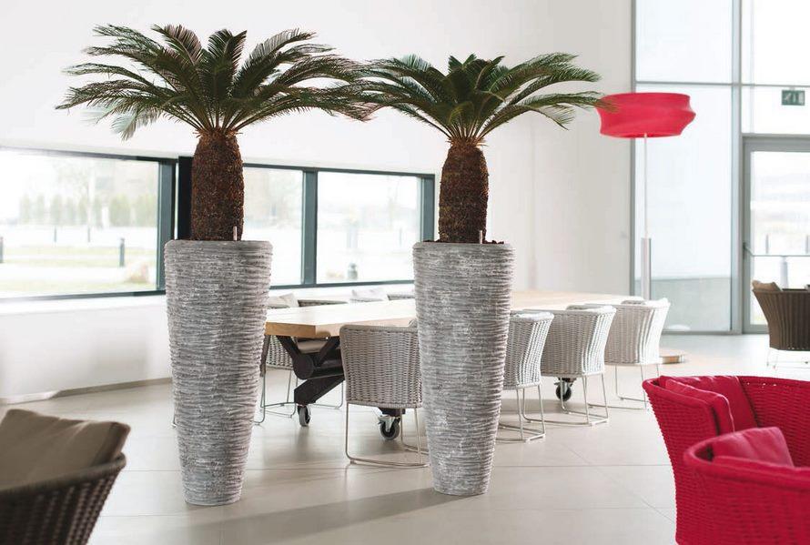 cycas-revoluta-polystone-pflanzvase-stimmungsbild
