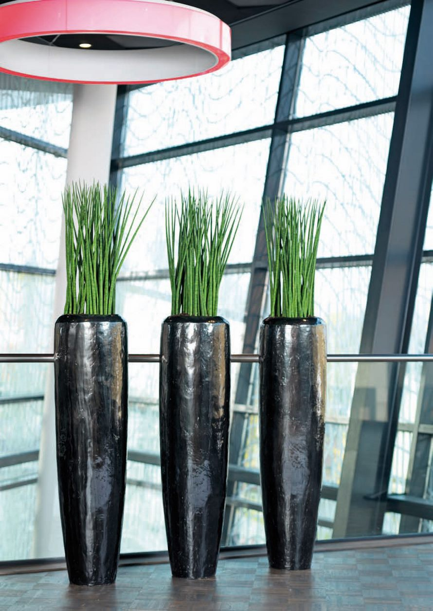 sansevieria spikes marmorates 60 cm terrapalme heim und gartenshop. Black Bedroom Furniture Sets. Home Design Ideas
