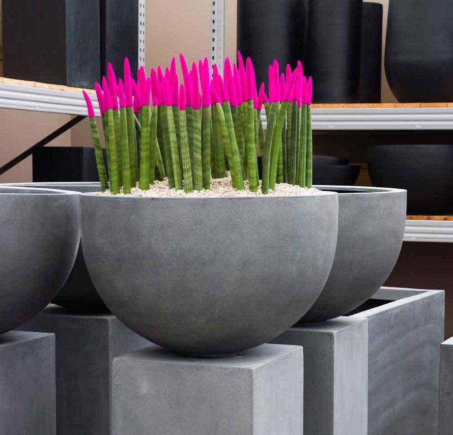 sansevieria-straight-color-pp-fiberstone-pflanzschale-stimmungsbild