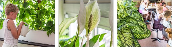 Banner-Pflanzenblog-Raumluft