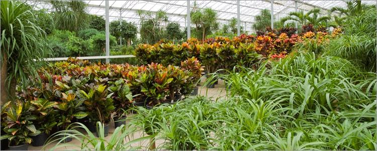 Croton iceton Blog Artikel