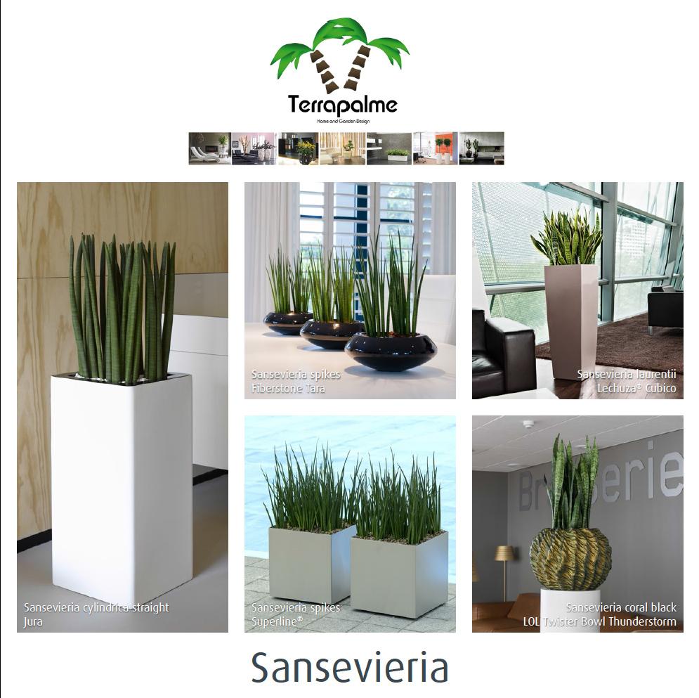 http://www.terrapalme.de/media/pdf/Sansevieria-Edition-Katalog-2.pdf
