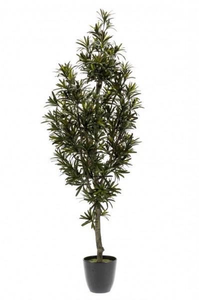 Podocarpus - Steineibe Kunstbaum