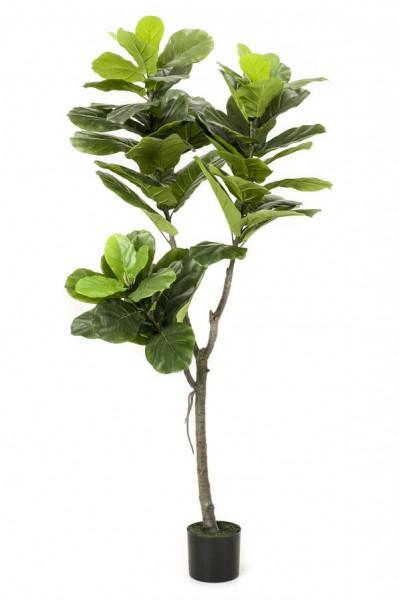Ficus Lyrata - Feigen Kunstbaum