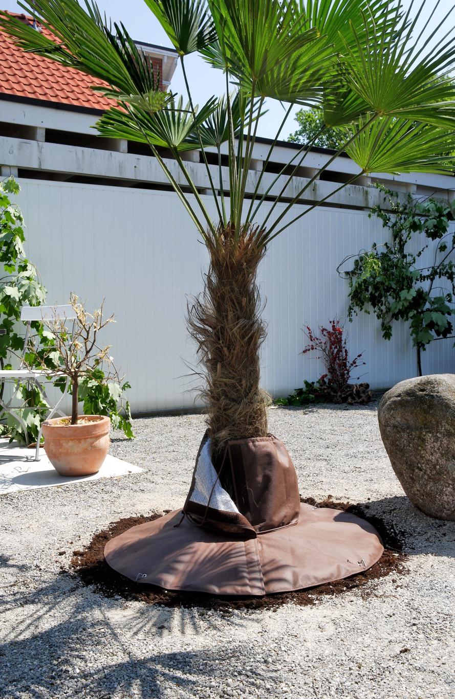 Palmpflanzen-Wurzelschutz-Winterschutz-Stimmungsbild-1-890.jpg