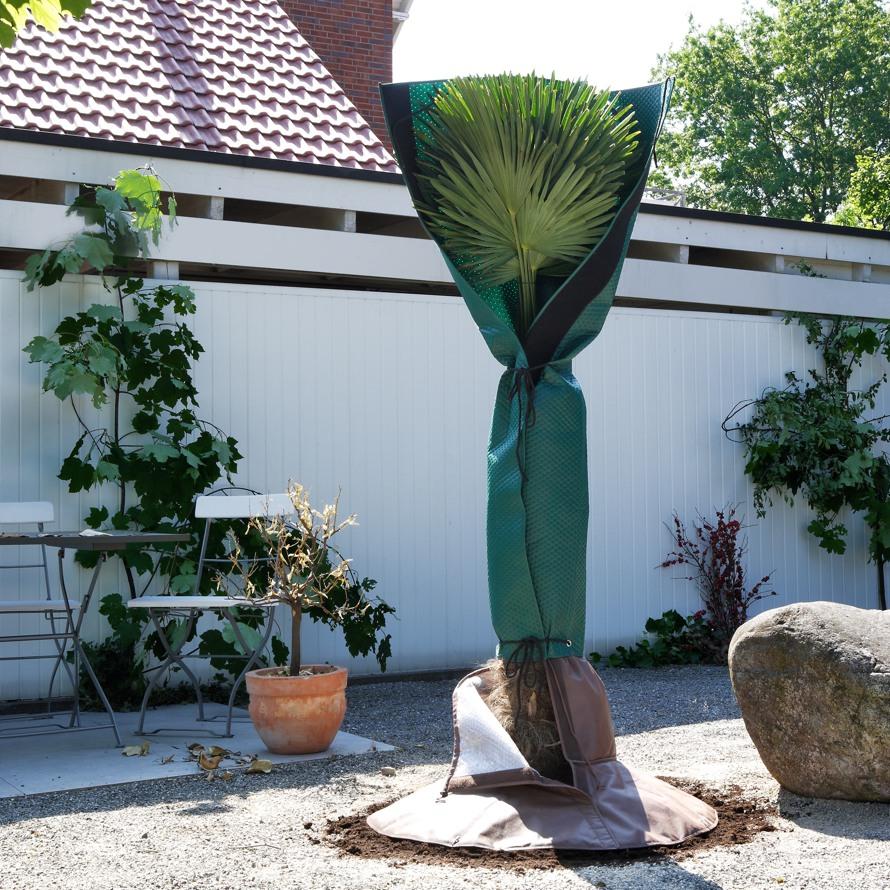 Vliesmantel-Palmen-Wurzelschutz-Winterschutz-Stimmungsbild.jpg