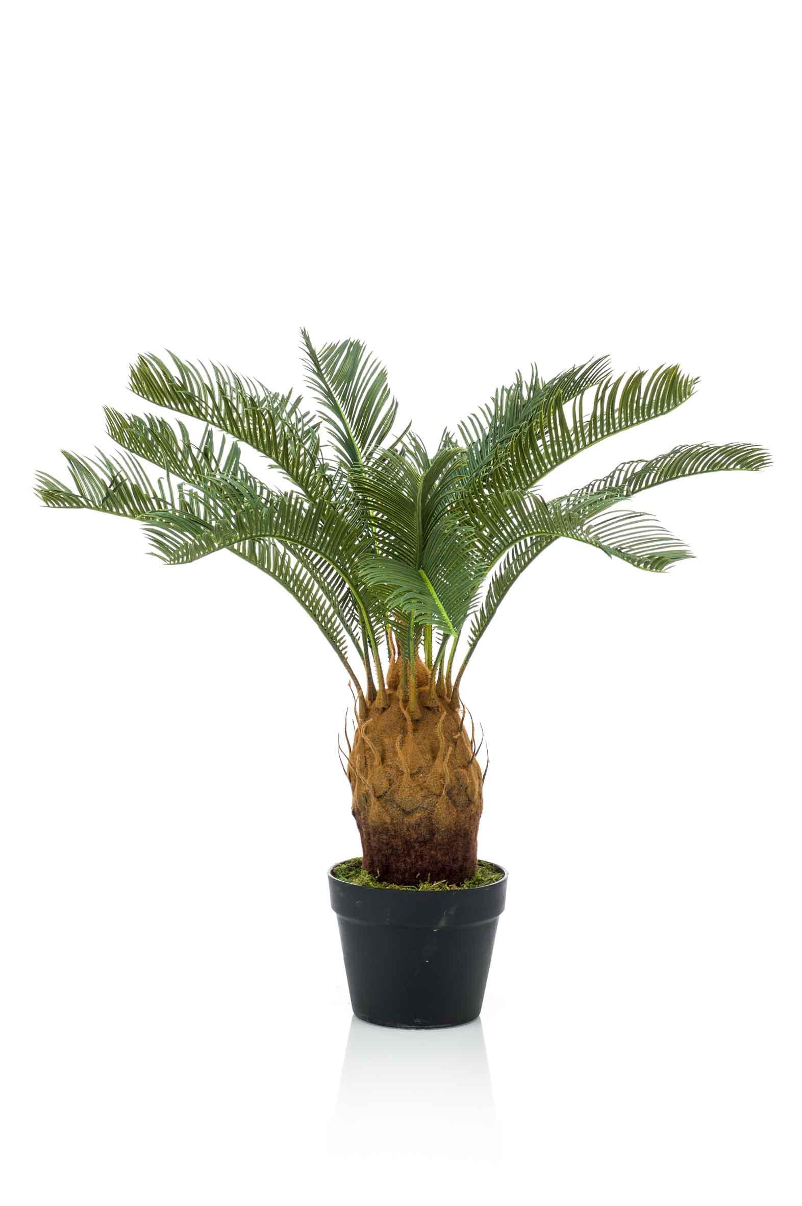 cycas revoluta palmfarn kunstpalme im plastiktopf terrapalme heim und gartenshop. Black Bedroom Furniture Sets. Home Design Ideas
