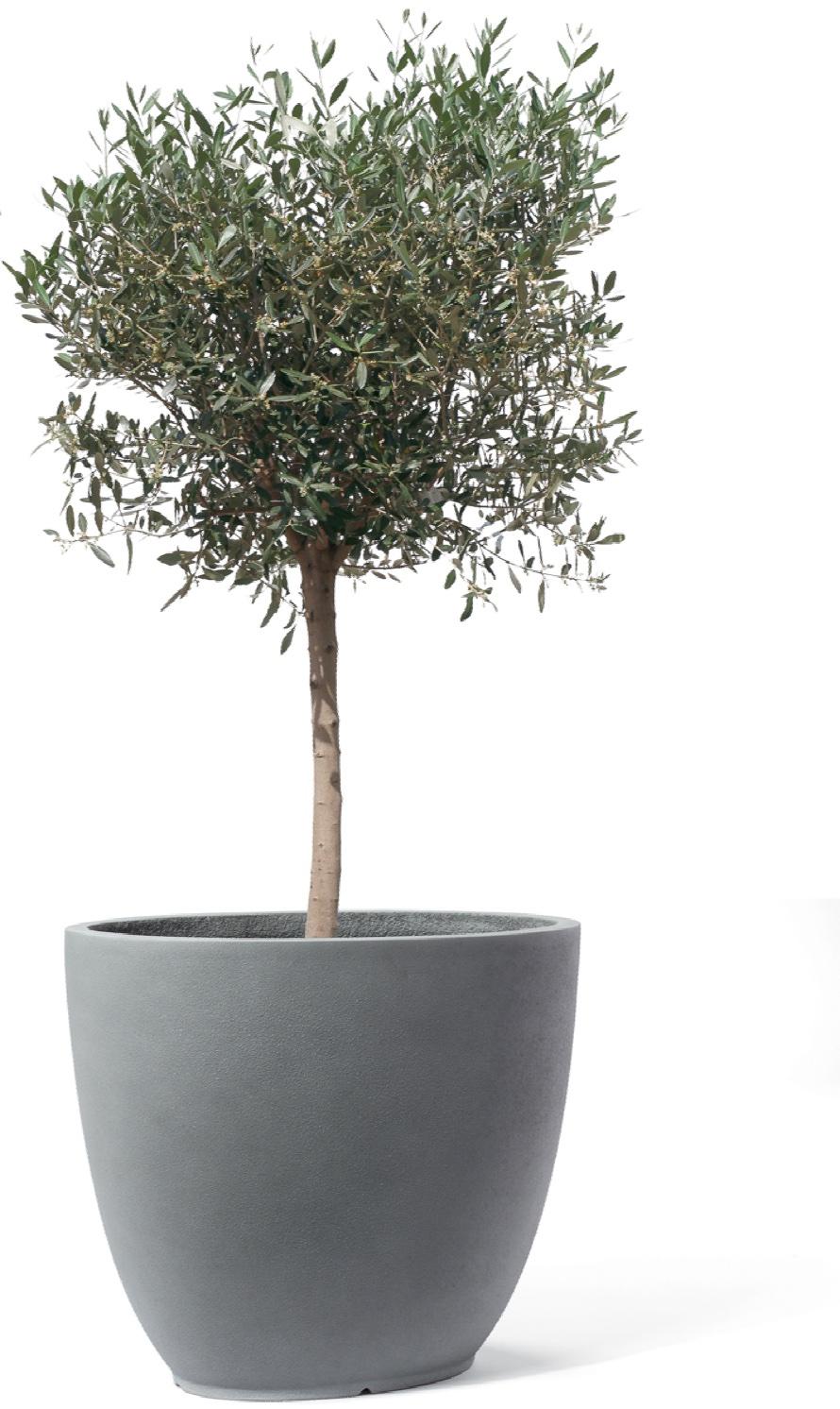 Canberra-Artline-titan-bepflanzt-Stimmungsbild.jpg
