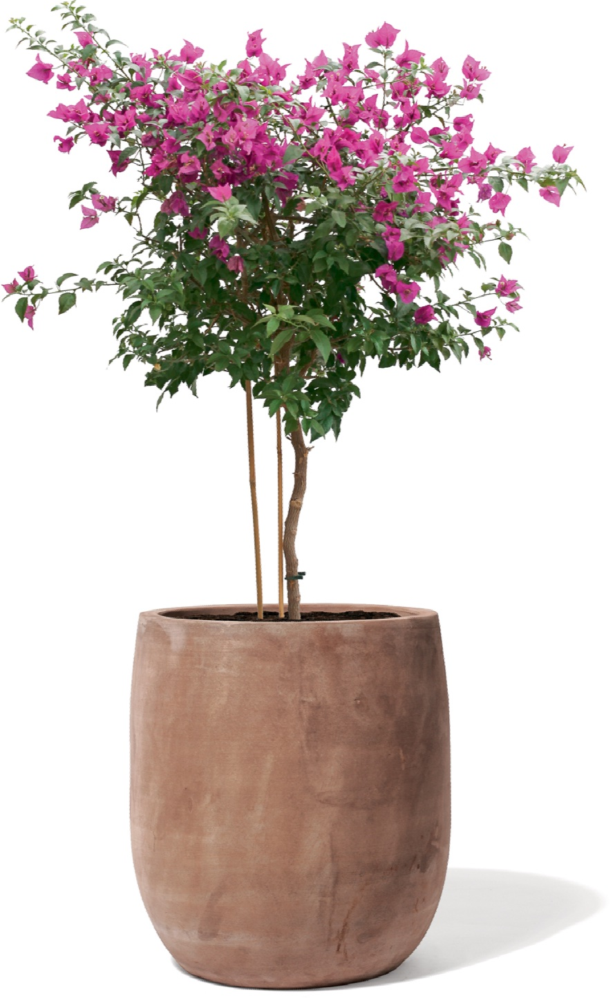 https://www.terrapalme.de/media/image/kirschke/terrabruna-terracotta-pistoia-stimmungsbild.jpg