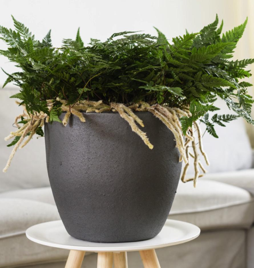 Anthrazit-Keramik-Pflanzvase-Stimmungsbild-1.jpg