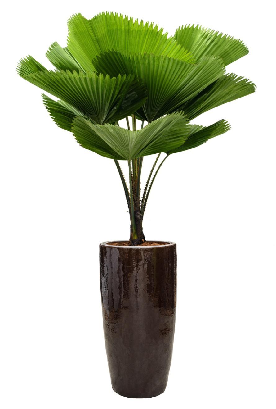 https://www.terrapalme.de/media/image/nk/Braun-Keramik-Pflanzkuebel-Stimmungsbild.jpg