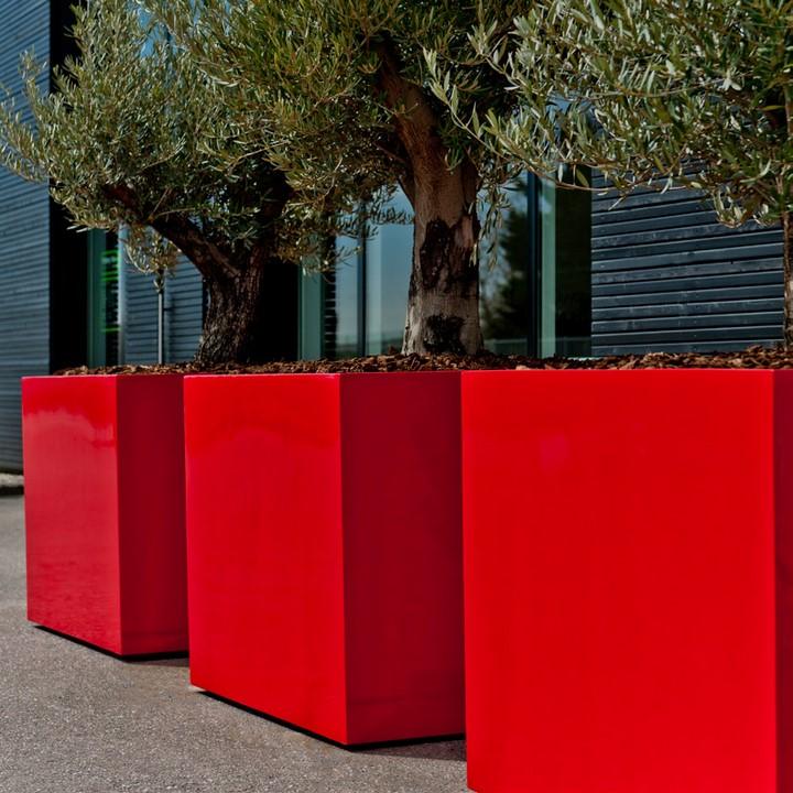 olea europaea olivenbaum verzweigt terrapalme heim. Black Bedroom Furniture Sets. Home Design Ideas