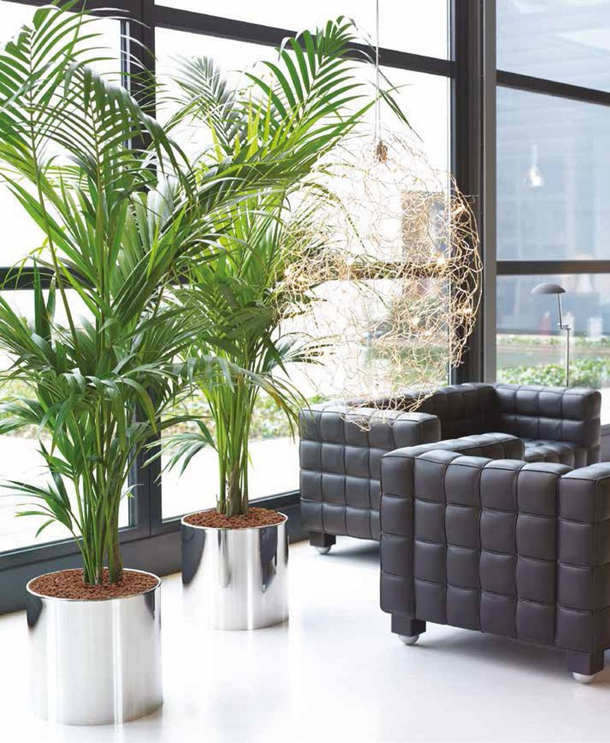 plants in the living room aluminium poliert cylinder pflanzk 252 bel terrapalme heim 23175