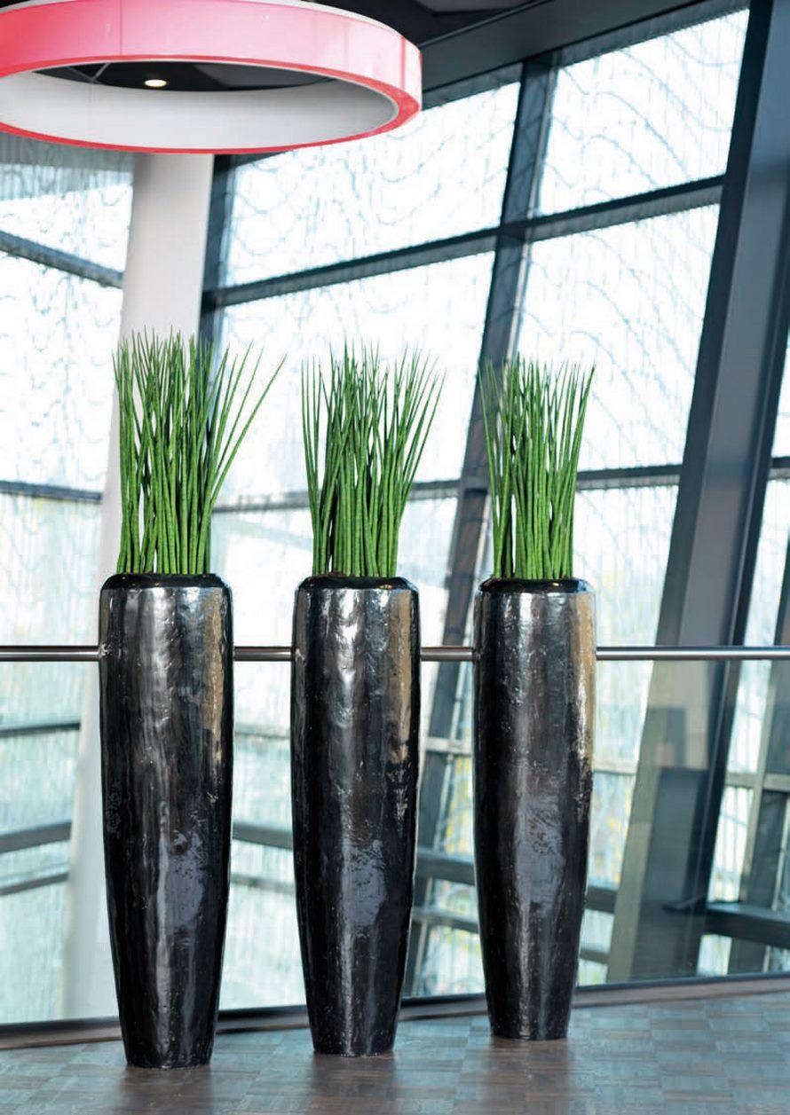 sansevieria spikes marmorates 60 cm terrapalme heim und. Black Bedroom Furniture Sets. Home Design Ideas