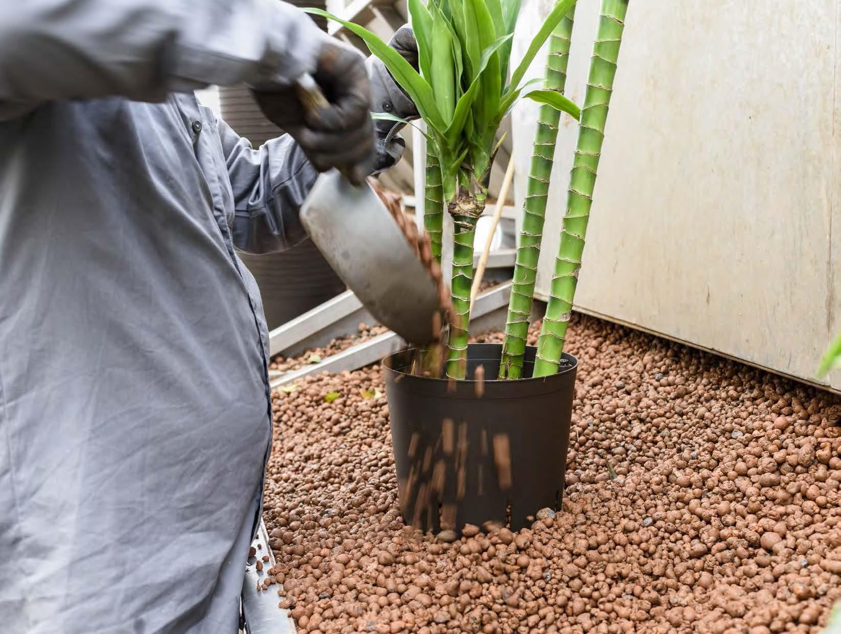 https://www.terrapalme.de/media/images/Blaehton-Hydrokultur-Pflanzen.jpg