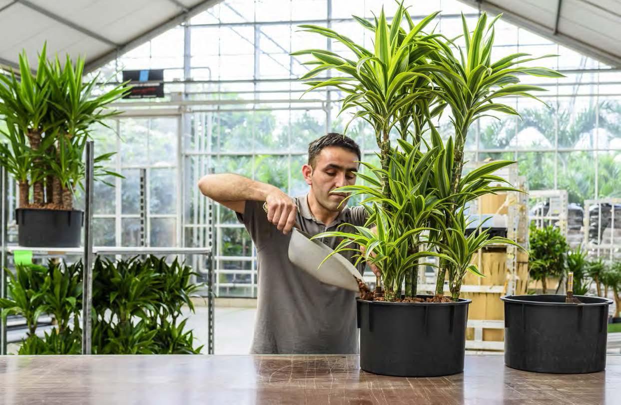 https://www.terrapalme.de/media/images/Was-Sie-brauchen-Hydrokultur-Pflanzen.jpg